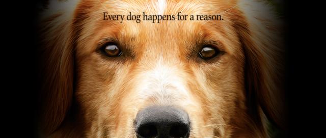 PETA organizuje protesty przed pokazami filmu Był sobie pies