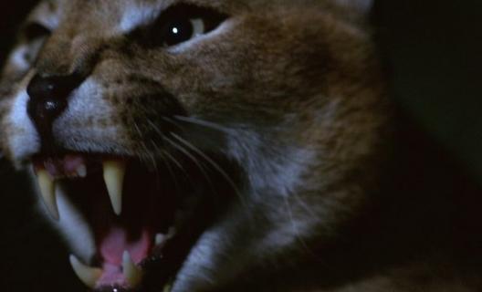 Dead By Dawn – dokument przyrodniczy w klimacie horroru. Zobacz zwiastun