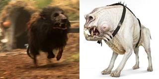 """Koreliańskie psy - scenarzyści potwierdzili, że miały być one nawiązaniem do psów z """"Willow"""". Decyzja o tym została podjęta zanim Ron Howard dołączył do ekipy"""