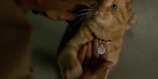 """Poznajcie Goose'a, kota Carol - choć w komiksach wabi się on Chewie, twórcy chcieli najprawdopodobniej hołdować bohaterowi filmu """"Top Gun""""; sprawa z Goosem wygląda tak, że należy on do kosmicznej rasy Flerken, której przedstawiciele w swoich ciałach posiadają... portale do przenoszenia się między wymiarami"""