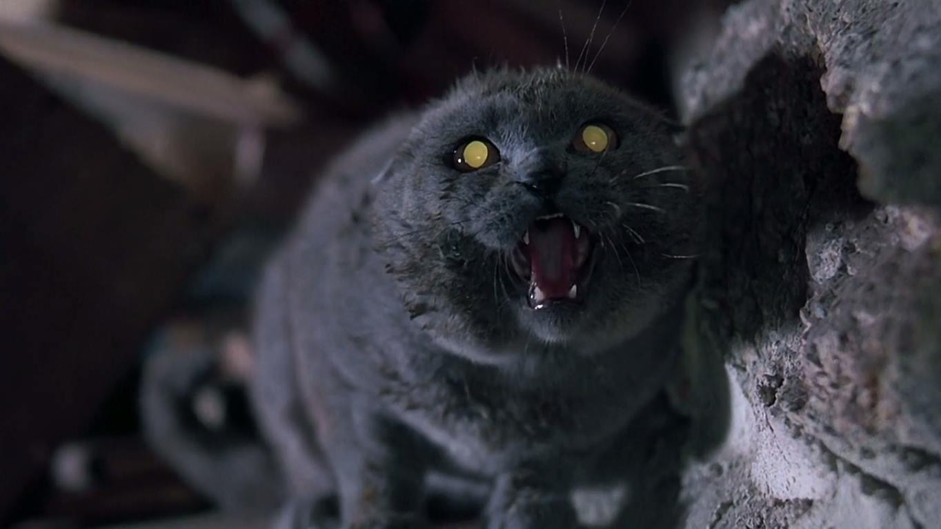Wiemy kto stanie za kamerą nowej wersji Smętarza dla zwierzaków