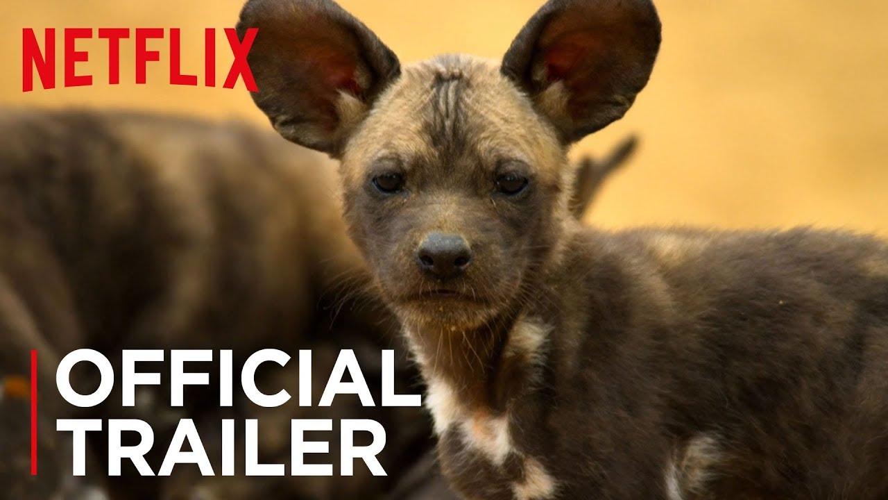 Our Planet – zwiastun przyrodniczego serialu Netflixa od twórców Planety Ziemia
